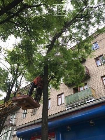 Краматорские коммунальщики наконец-то занялись аварийными деревьями  , фото-3