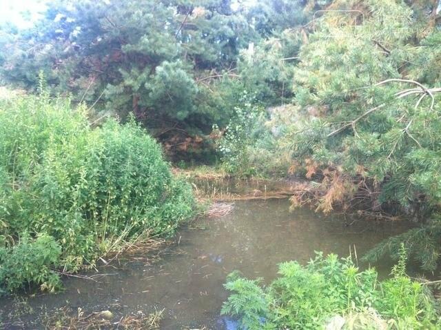 Прокуратура выясняет обстоятельства загрязнения голубых озер, фото-1