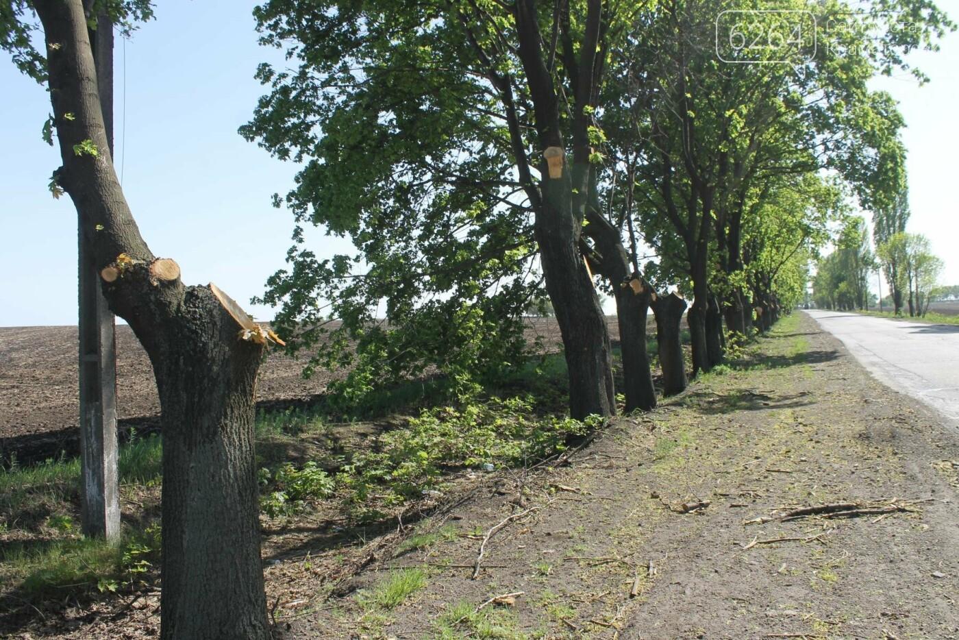 Опиловка близ Краматорска: непроглядный дым, вывоз отборного леса и скрытные «лесорубы», не знающие для кого и чего работают, фото-1