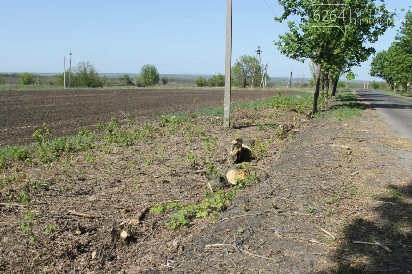 Опиловка близ Краматорска: непроглядный дым, вывоз отборного леса и скрытные «лесорубы», не знающие для кого и чего работают, фото-4