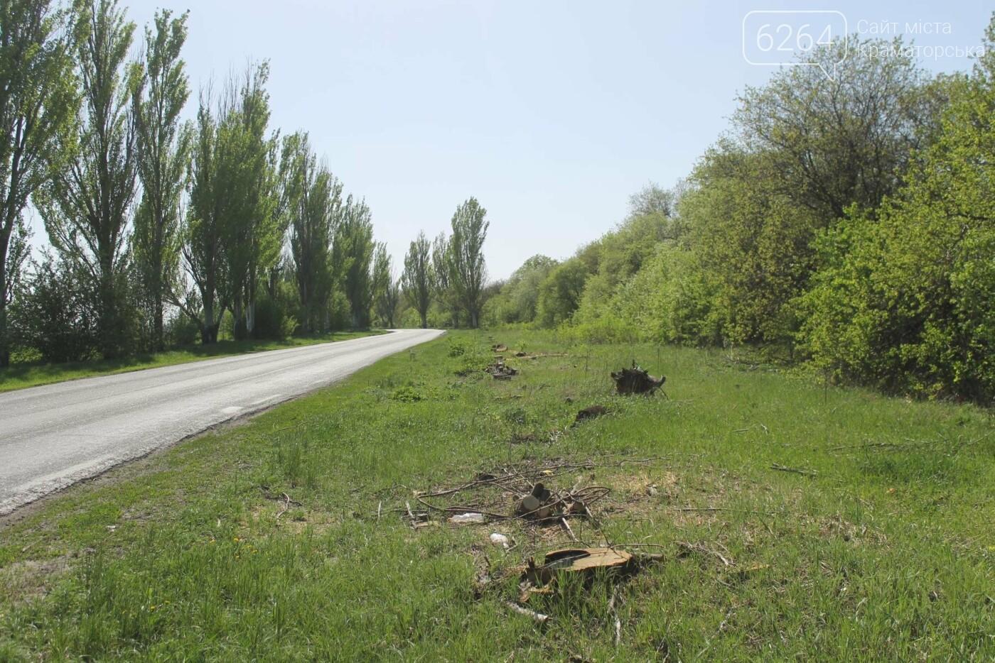Опиловка близ Краматорска: непроглядный дым, вывоз отборного леса и скрытные «лесорубы», не знающие для кого и чего работают, фото-3