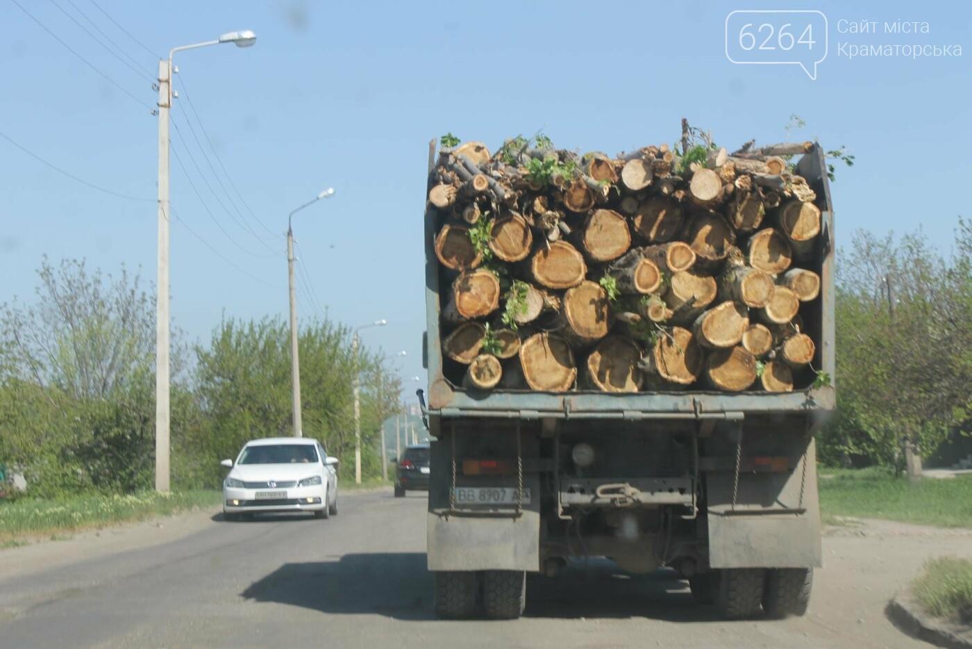 Опиловка близ Краматорска: непроглядный дым, вывоз отборного леса и скрытные «лесорубы», не знающие для кого и чего работают, фото-9