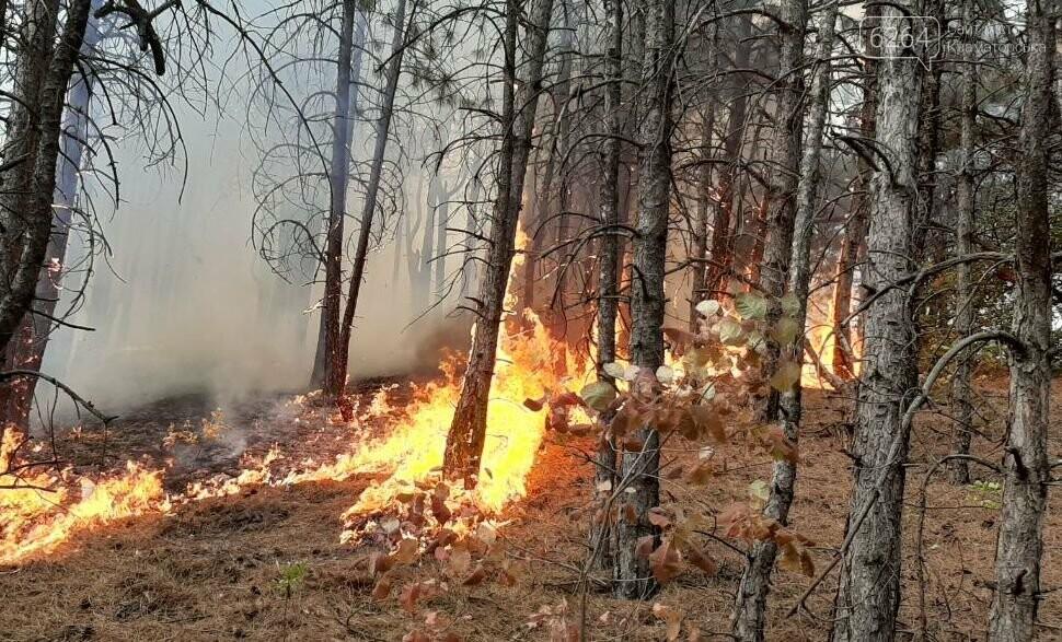 Масштабный лесной пожар в Краматорске – спасатели подозревают поджог (фото), фото-2