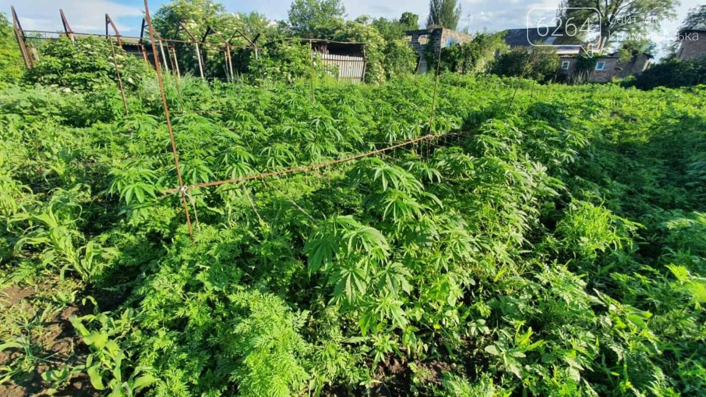 В Краматорском районе изъяли 15 кг конопли с незаконной плантации, фото-1