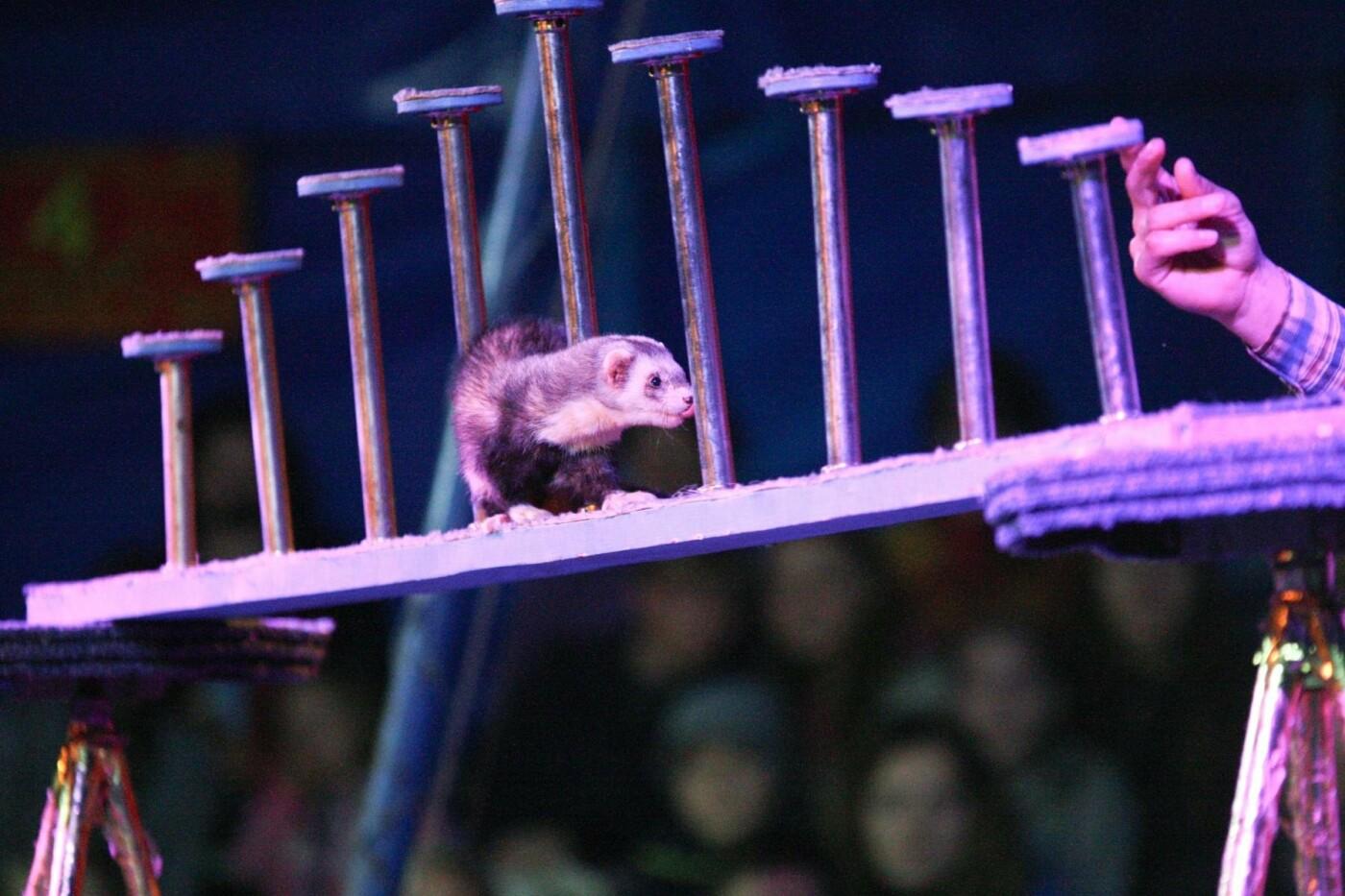 Европейский цирк на воде Riviera с новой программой «Остров Сокровищ» в Краматорске, фото-2