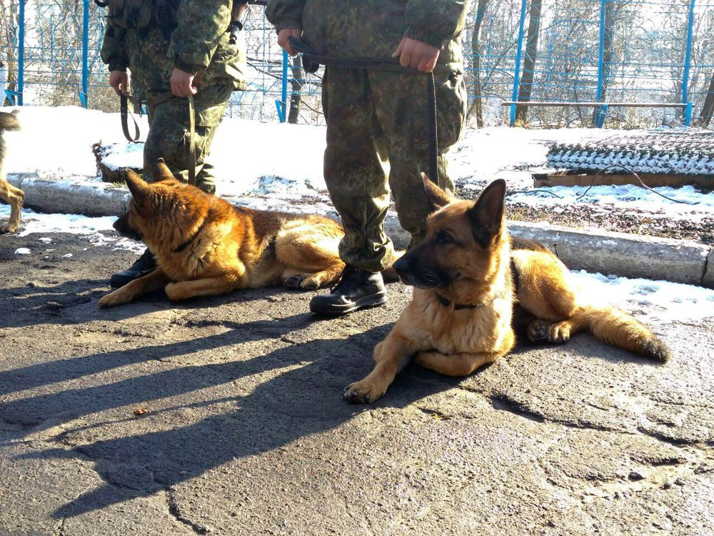 На Новый год безопасность жителей Донетчины будут охранять служебные собаки из 8 областей, фото-1