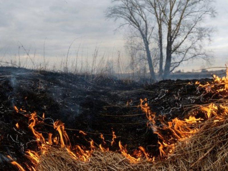 Спасатели Краматорска тушили пожар в экосистеме, фото-1