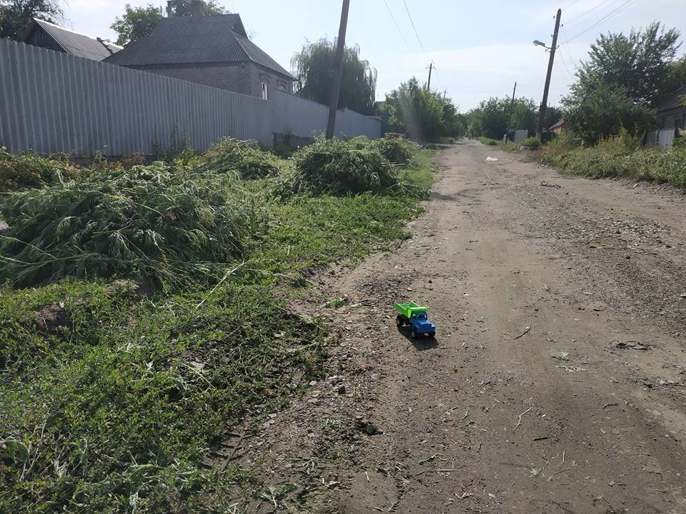 Гигантские заросли: в Краматорске уничтожили плантацию амброзии, фото-1
