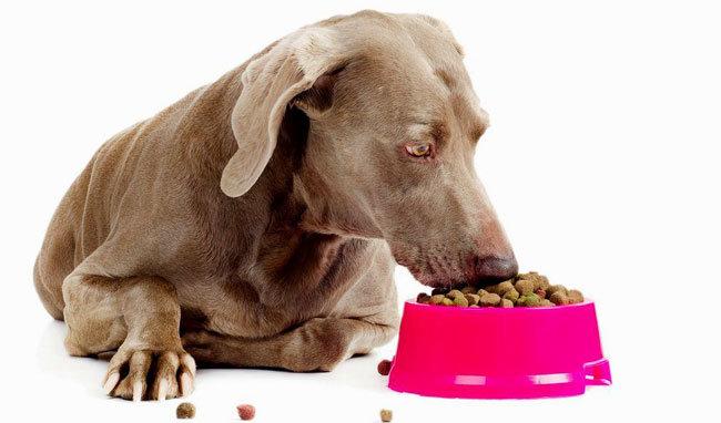 Ветеринарный корм для собак - когда его использовать?, фото-1
